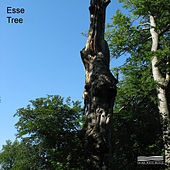 Tree by Esse