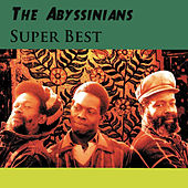 Super Best de Abyssinians