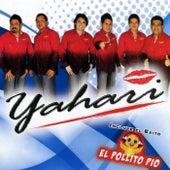 El Pollito Pio by Yahari