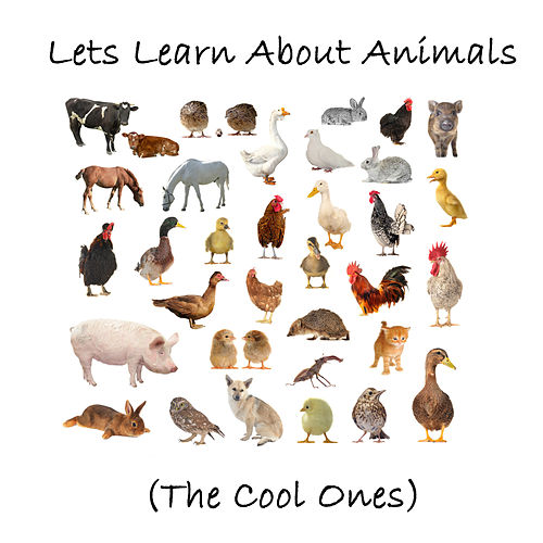 Let's Learn About Animals (The Cool Ones) by Sharon Lois and Bram