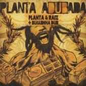 Planta Adubada by Planta E Raiz