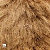 Lion (Remixes) by Hvob