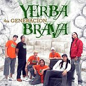 4ta Generación de Yerba Brava