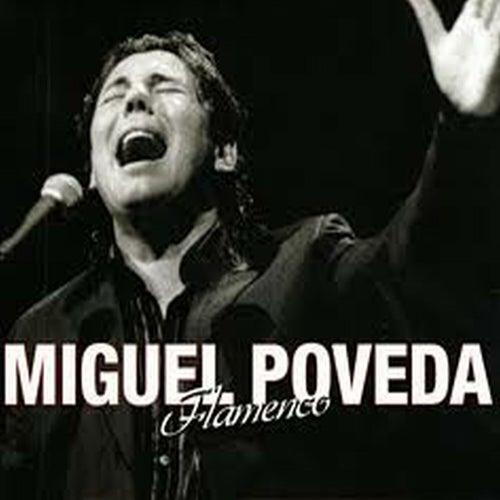 Flamenco by Miguel Poveda