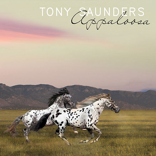 Appaloosa by Tony Saunders