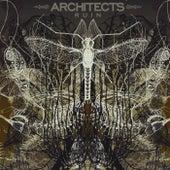 Ruin de Architects