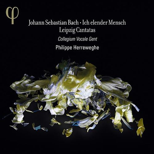 Bach: Ich elender Mensch - Leipzig Cantatas by Various Artists