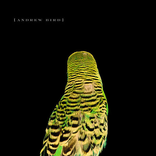 Armchair Apocrypha by Andrew Bird