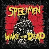 Wake the Dead de Specimen