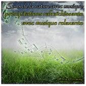 Sons de la nature avec musique: précipitations rafraîchissante avec musique relaxante de Chris Conway