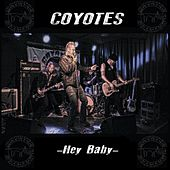 Hey Baby by Coyotes