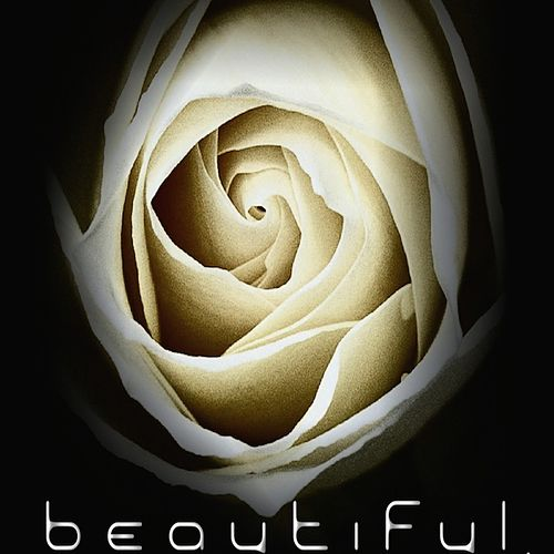 Beautiful by Shelter