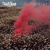 Say Hello von Tussilago