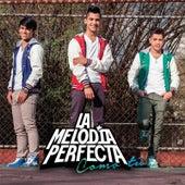 Como Tu de La Melodia Perfecta