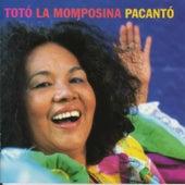 Pacantó von Toto La Momposina