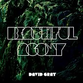 Beautiful Agony by David Gray