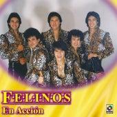 Felinos En Accion by Felinos