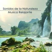 Sonidos de la Naturaleza y Musica Relajante de Sonidos de la Naturaleza Relajaciòn