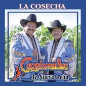 La Cosecha by Cardenales De Nuevo León