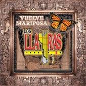 Vuelve Mariposa by Los Llayras