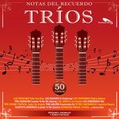 Tríos, Notas del Recuerdo de Various Artists