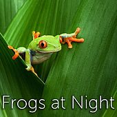 Frogs at Night by Tmsoft's White Noise Sleep Sounds
