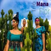 Trio Sinhá Flor von Trio Sinhá Flor