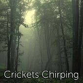 Crickets Chirping by Tmsoft's White Noise Sleep Sounds