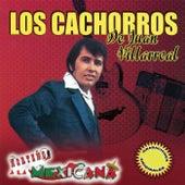 Norteno a la Mexicana by Los Cachorros de Juan Villareal
