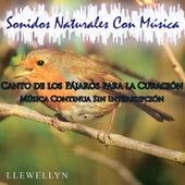Canto de los Pájaros para la Curación: Música Continua Sin Interrupción: Sonidos Naturales Con Música by Llewellyn