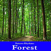 Natures Rhythms: Forest by Wildlife Bill