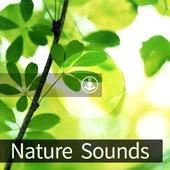Nature Sounds de Satorio