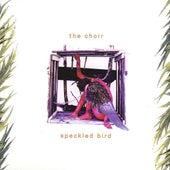 Speckled Bird by The Choir (3)