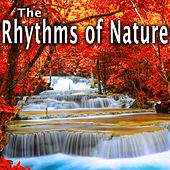 The Rhythms of Nature by Wildlife Bill