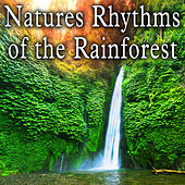 Natures Rhythms of the Rainforest by Wildlife Bill