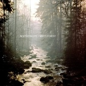 Mixed Forest by Northern Lite