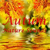 Autumn Nature Sounds: The Soothing Sounds of Fall by Various Artists