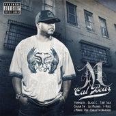 Cal Bear by M Dash