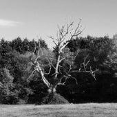 The Lightning Tree by Sam Jones