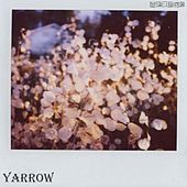 Yarrow by the Yarrow