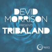 Tribaland von Devid Morrison