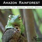 Amazon Rainforest von Soothing Sounds