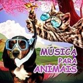 Música para Animais – Caes e Gatos, Música para Relaxar, Sons da Natureza, Música Instrumental, Música para Redução do Estresse de Academia de Música para Animais
