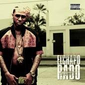 Elchapo Rado von Eldorado Red