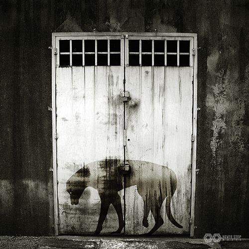 Dogtown by Markus GIBB