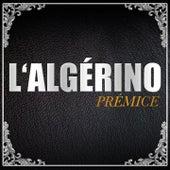 Prémice de L'algerino