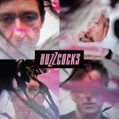 In the Back de Buzzcocks