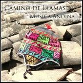 Camino de Llamas - Musica Andina de Alborada