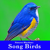 Natures Rhythms: Song Birds by Wildlife Bill
