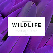 Wildlife, Vol. 5 by Various Artists